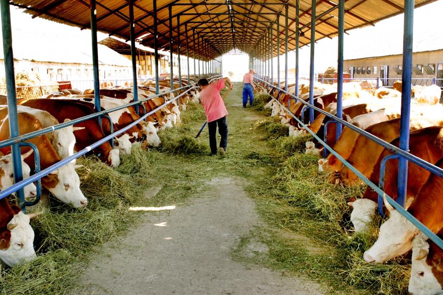 Fermierii afectaţi de criza COVID-19 pot solicita sprijin financiar la APIA Olt