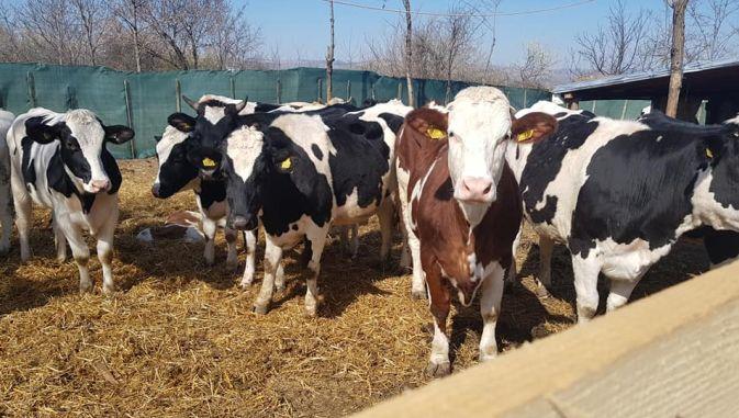 4.500 de fermieri olteni au cerut subvenţia COVID-19. 23 octombrie, ultima zi de depunere a solicitărilor